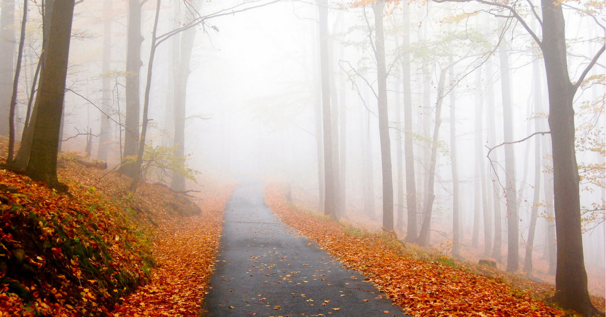 010 – Why Trust is More Important than Clarity: Choosing the Right Path in the Fog